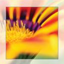 Rouwkaart bloem