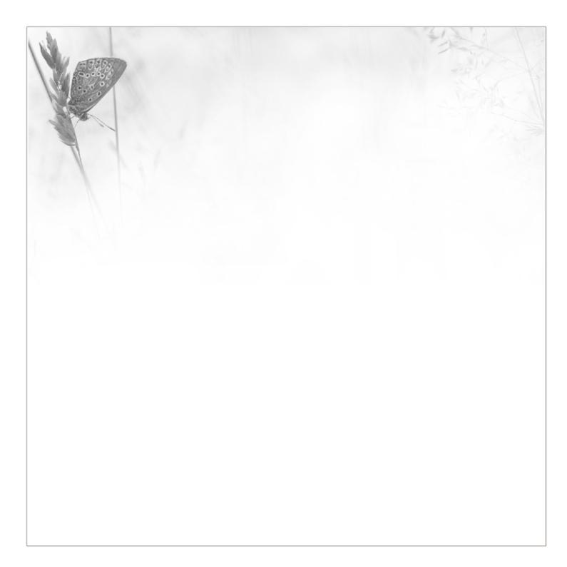 vlinder rouwkaarten